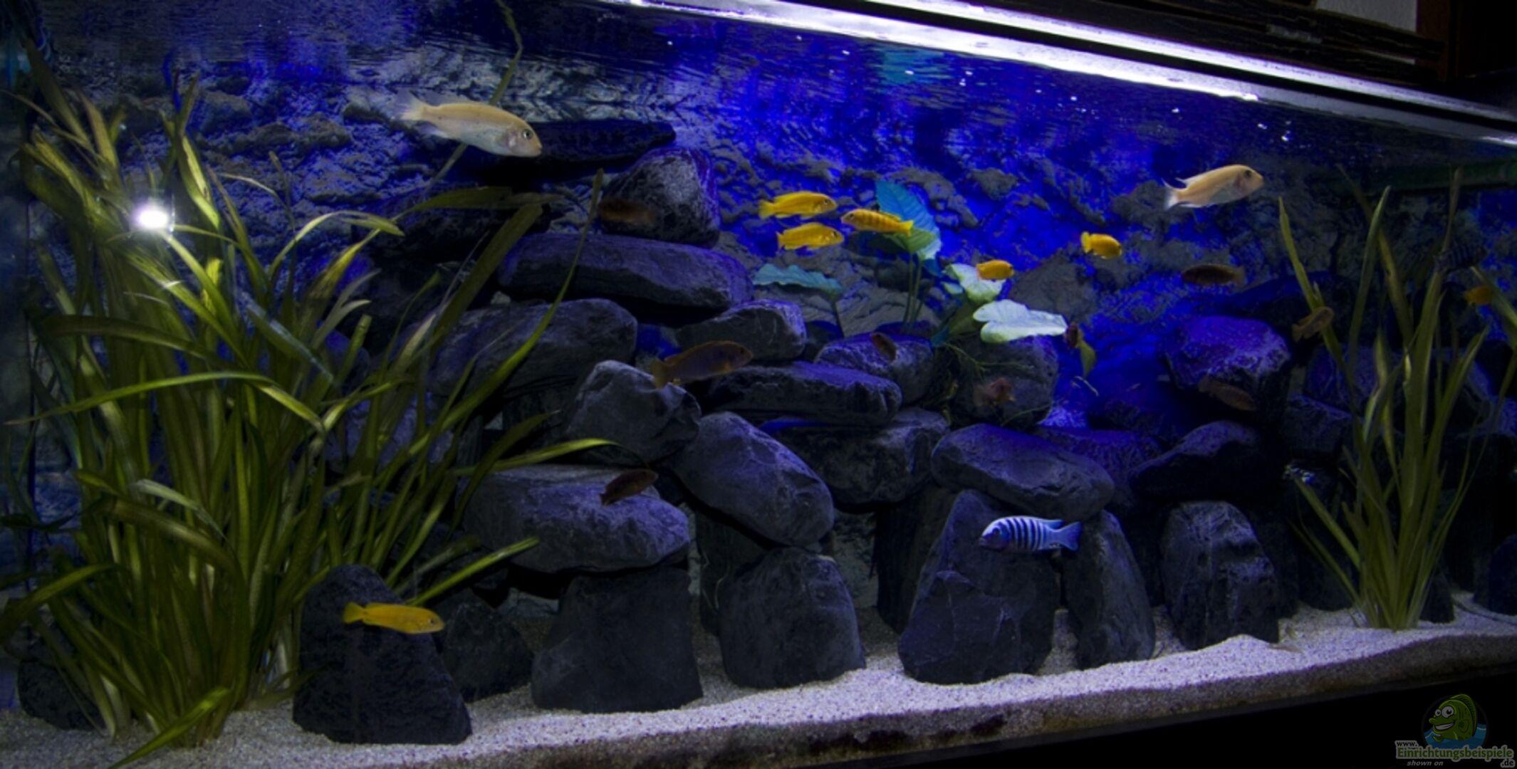 Aquarium von Jo: Malawibecken 300L