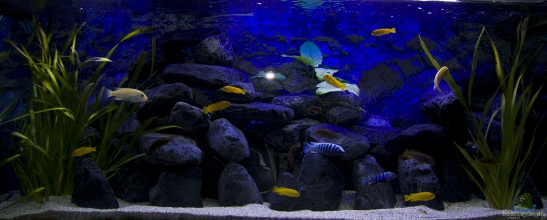 aquarium von jo malawibecken 300l. Black Bedroom Furniture Sets. Home Design Ideas