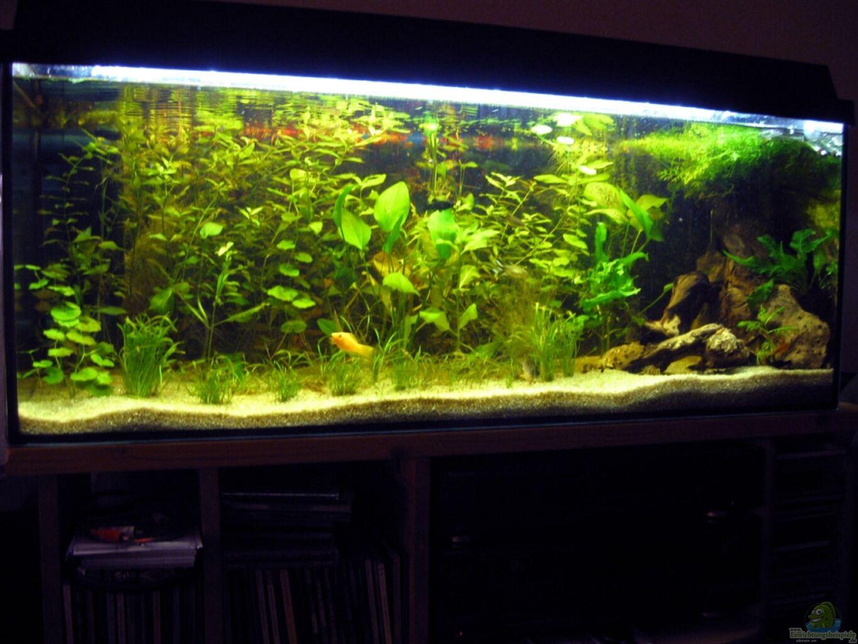 aquarium von wassernarr becken 160 liter. Black Bedroom Furniture Sets. Home Design Ideas