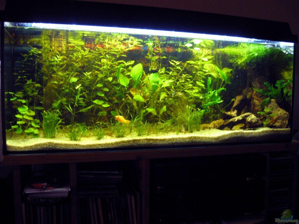 einrichtungsbeispiele f r amazonas aquarien. Black Bedroom Furniture Sets. Home Design Ideas