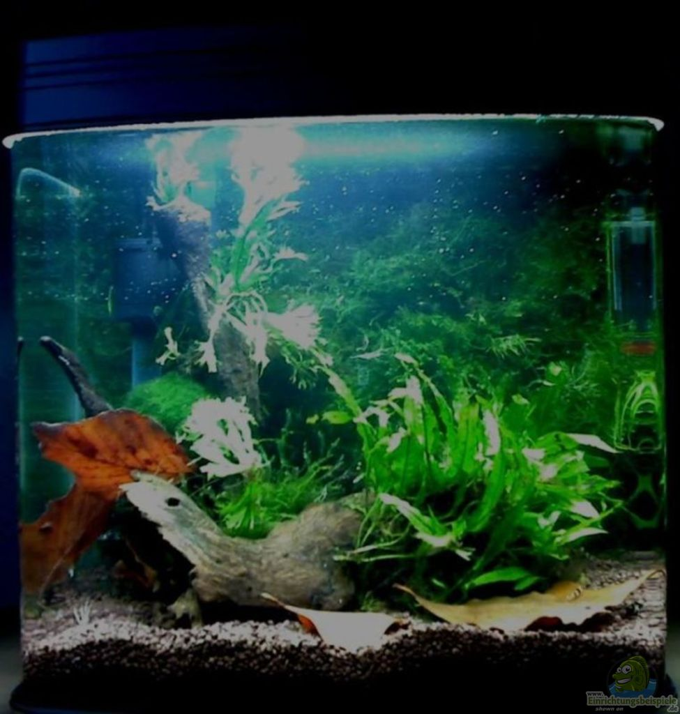 aquarium von aquadog panorama. Black Bedroom Furniture Sets. Home Design Ideas