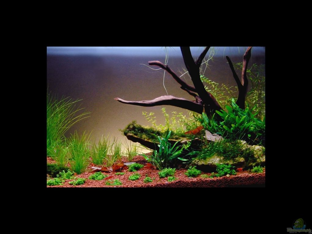 einrichtungsbeispiele f r aquascaping aquarien. Black Bedroom Furniture Sets. Home Design Ideas