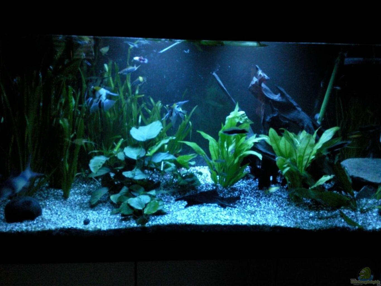 aquarium von ak1982 im wohnzimmer. Black Bedroom Furniture Sets. Home Design Ideas