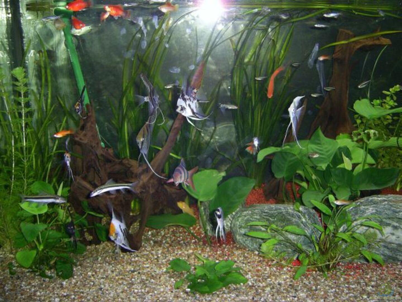 Aquarium Wohnzimmer Dekoration : Aquarium von ak  im wohnzimmer