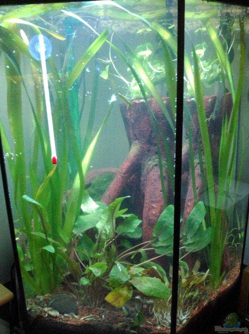 aquarium von toti311 15328 das 6 eck. Black Bedroom Furniture Sets. Home Design Ideas