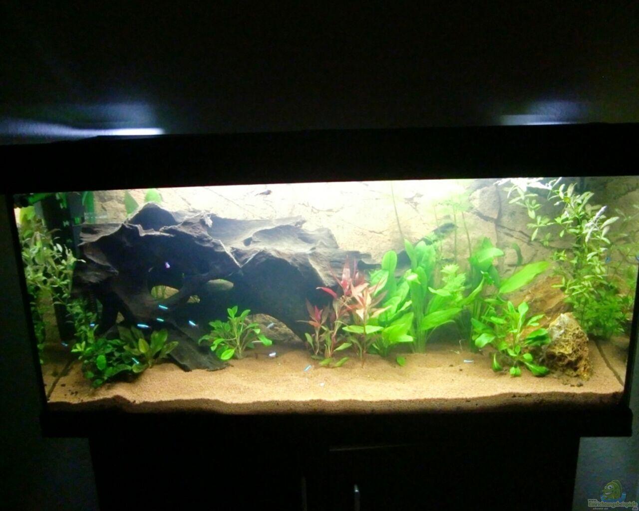 Aquarium von spl sanozama for Aquarium 120x40x50