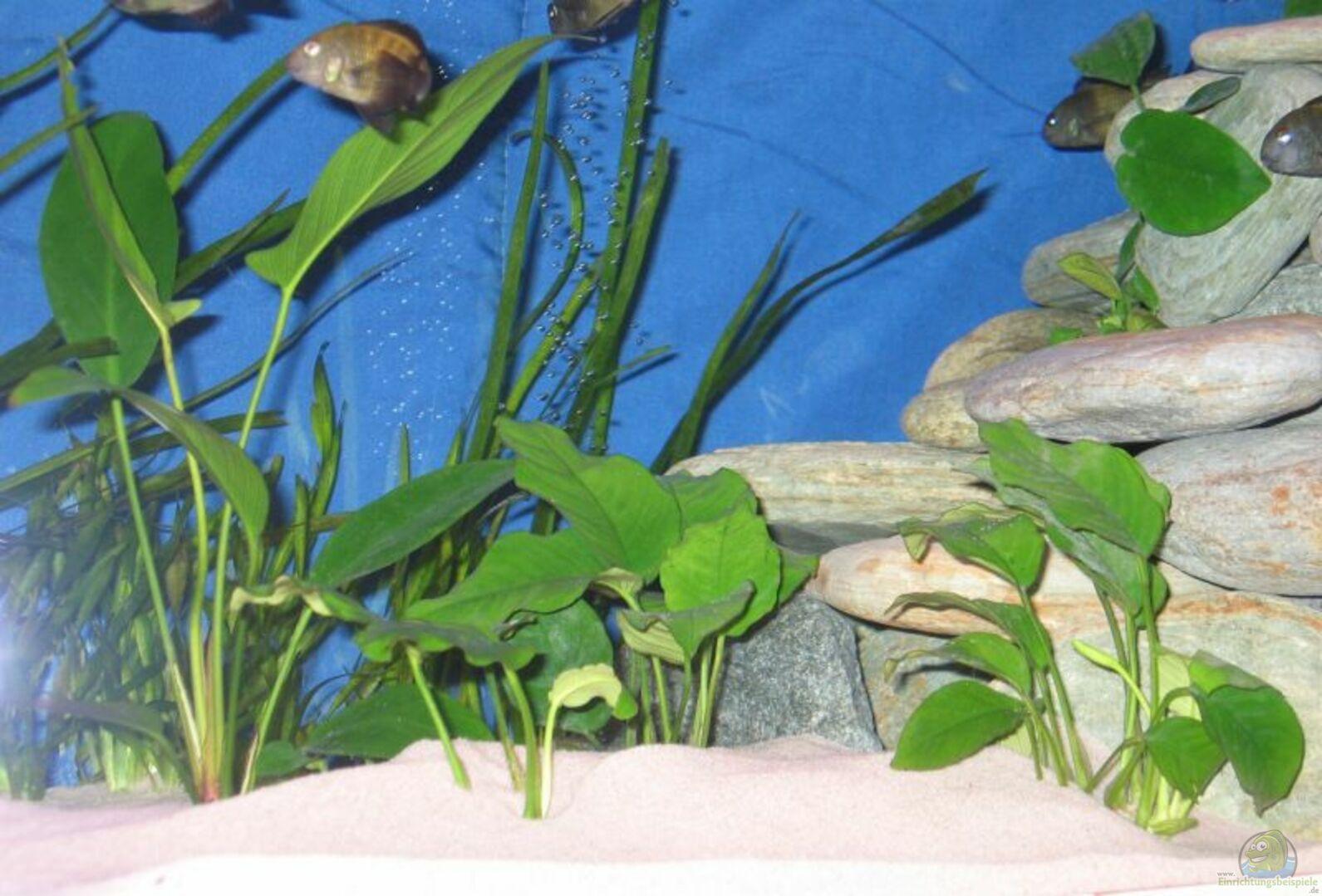 aquarium von hubert demonty becken 1544. Black Bedroom Furniture Sets. Home Design Ideas