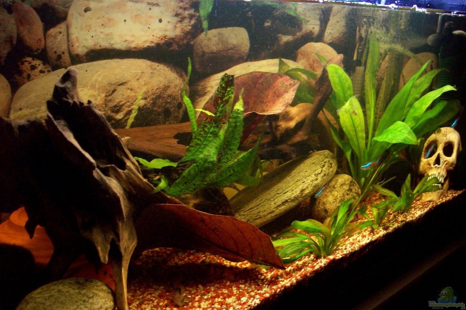 Aquarium von bela rio orellana for Waterhome aquarium
