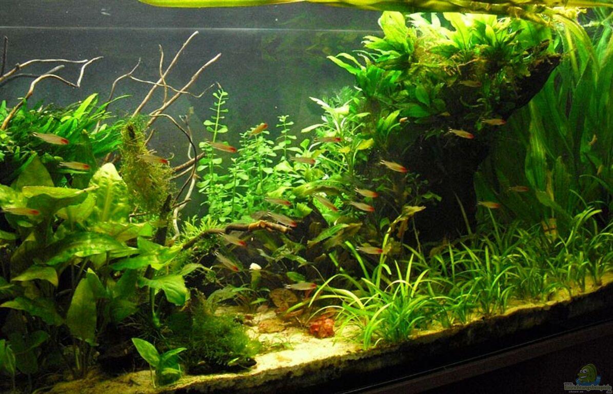 aquarium von mario74 salmler becken rotkopf kaiser. Black Bedroom Furniture Sets. Home Design Ideas
