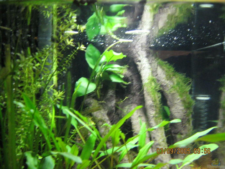 aquarium von kevin lange becken 1556. Black Bedroom Furniture Sets. Home Design Ideas