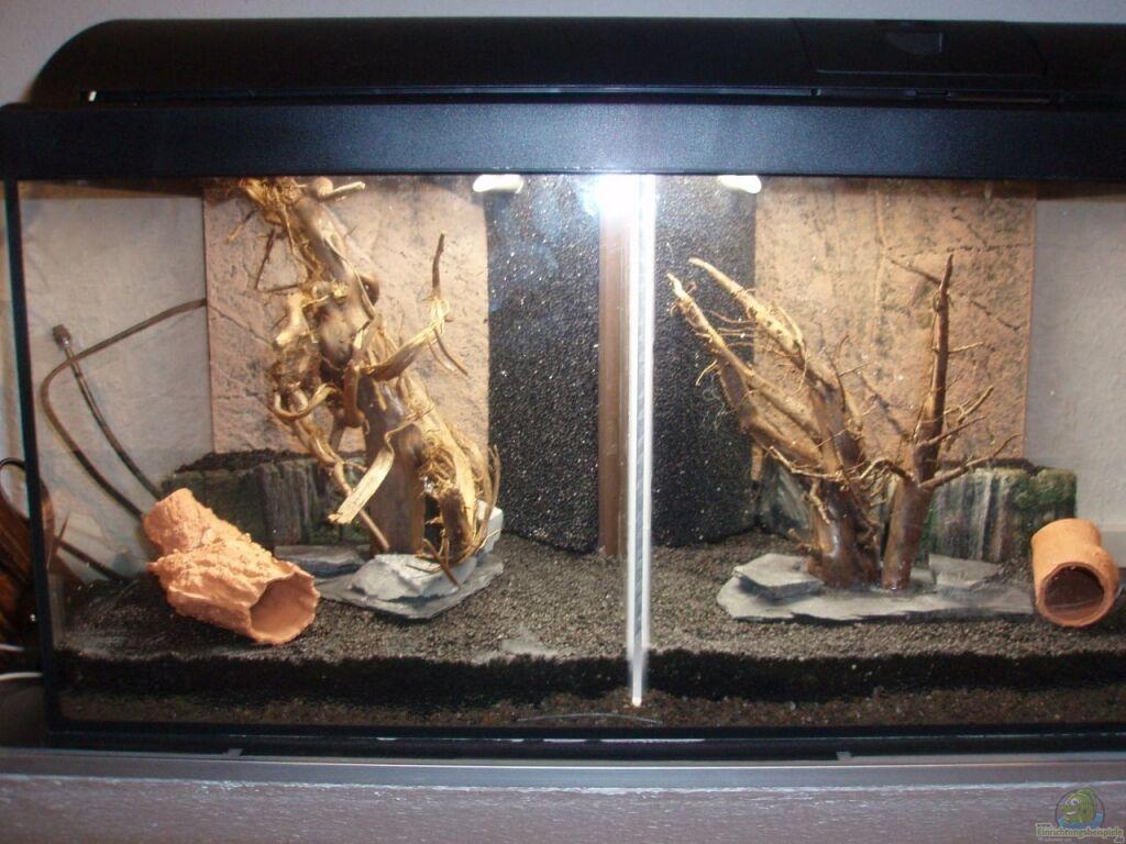 aquarium von snoeddenmops unser zweites k chenfenster. Black Bedroom Furniture Sets. Home Design Ideas