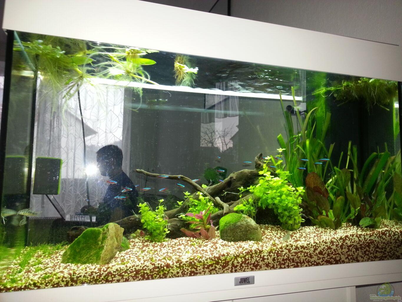 Aquarium von katharina m ller wohnzimmer raumteiler - Aquarium wohnzimmer ...