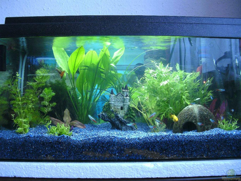 aquarium von daveyd das reich der entspannung. Black Bedroom Furniture Sets. Home Design Ideas