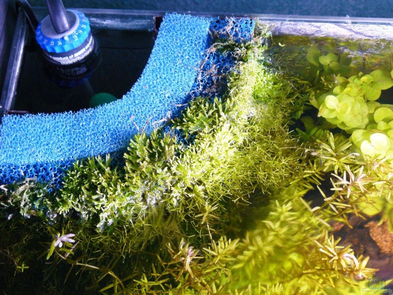 aquarium von andreas gr ndler mein kleines braunes. Black Bedroom Furniture Sets. Home Design Ideas