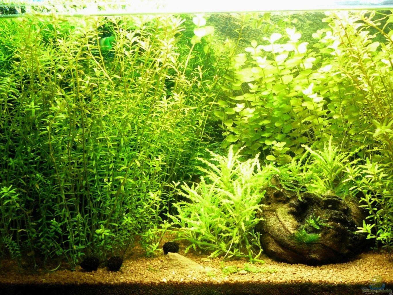 pflanzen im aquarium mein kleines braunes aus mein kleines braunes von andreas gr ndler. Black Bedroom Furniture Sets. Home Design Ideas