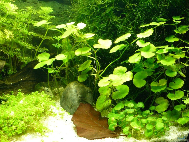 aquarium von andreas gr ndler 15727 kleines wei es. Black Bedroom Furniture Sets. Home Design Ideas