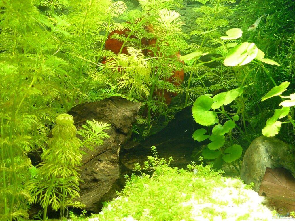 aquarium von andreas gr ndler kleines wei es. Black Bedroom Furniture Sets. Home Design Ideas