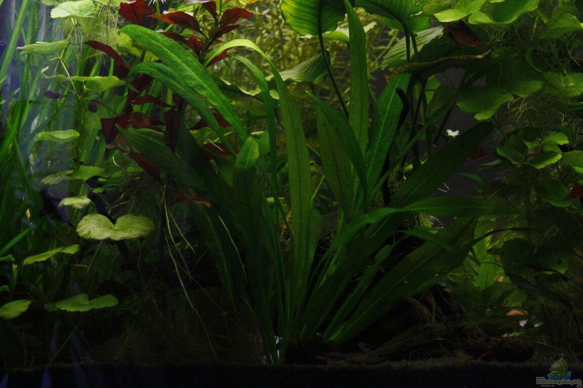 aquarium von nola46 raumteiler. Black Bedroom Furniture Sets. Home Design Ideas