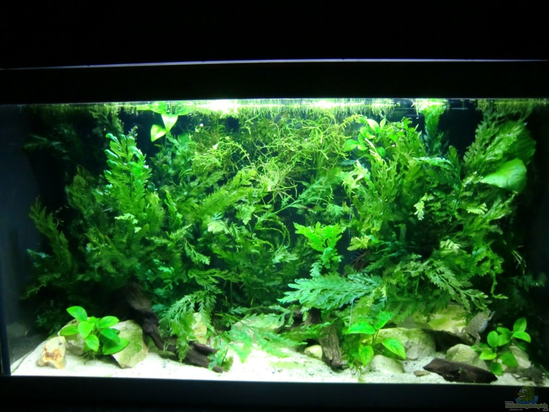 aquarium von kuller becken mit aphyosemion australe. Black Bedroom Furniture Sets. Home Design Ideas