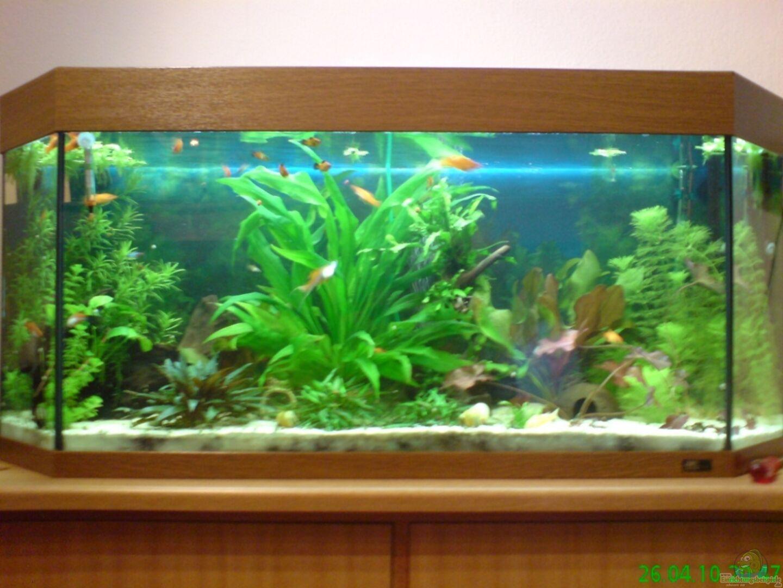 Aquarium hauptansicht von becken 15911 aus becken 15911 for Aquarium einrichtung