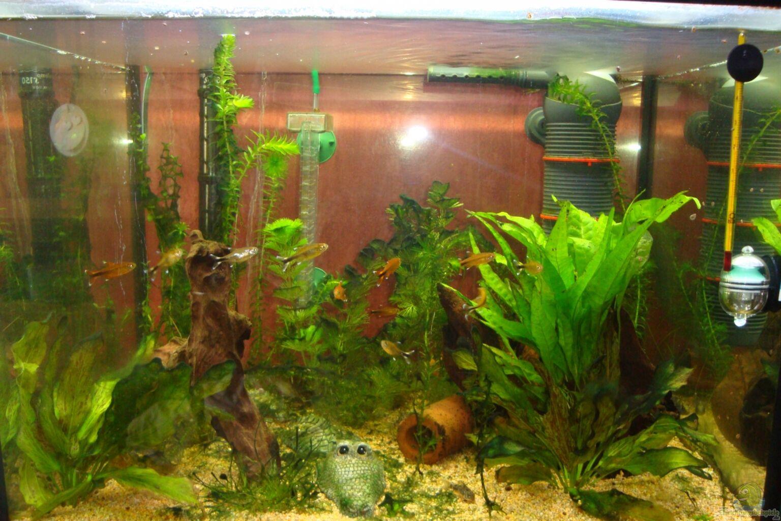 aquarium von poldi1981 mein kleines becken. Black Bedroom Furniture Sets. Home Design Ideas