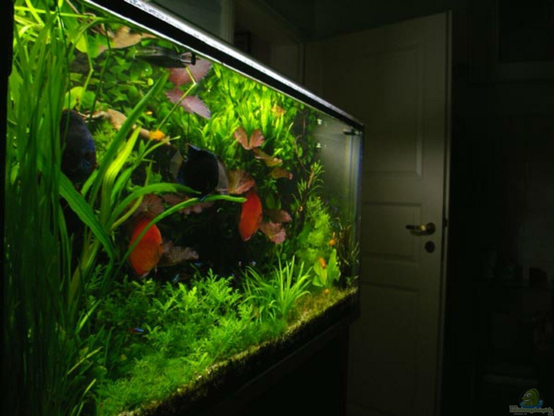 Aquarium pflanzen diskus aus pflanzen diskus von condor for Aquarium pflanzen