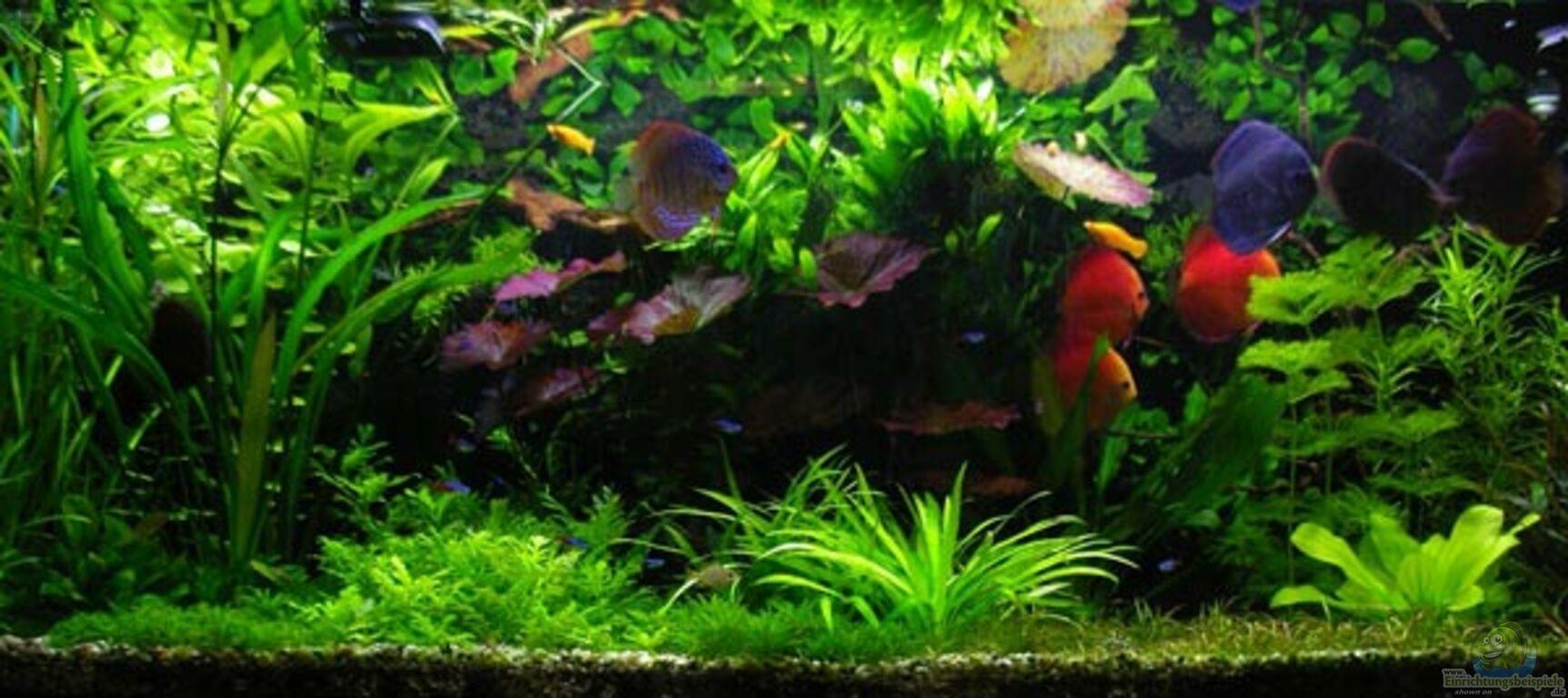 Aquarium von condor pflanzen diskus for Diskus aquarium