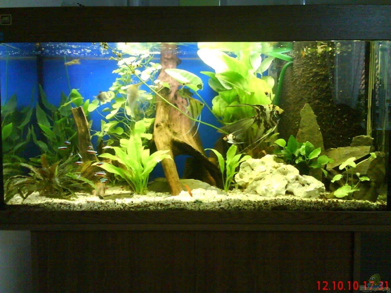 aquarium von ranger2332 15986 hauptbecken. Black Bedroom Furniture Sets. Home Design Ideas
