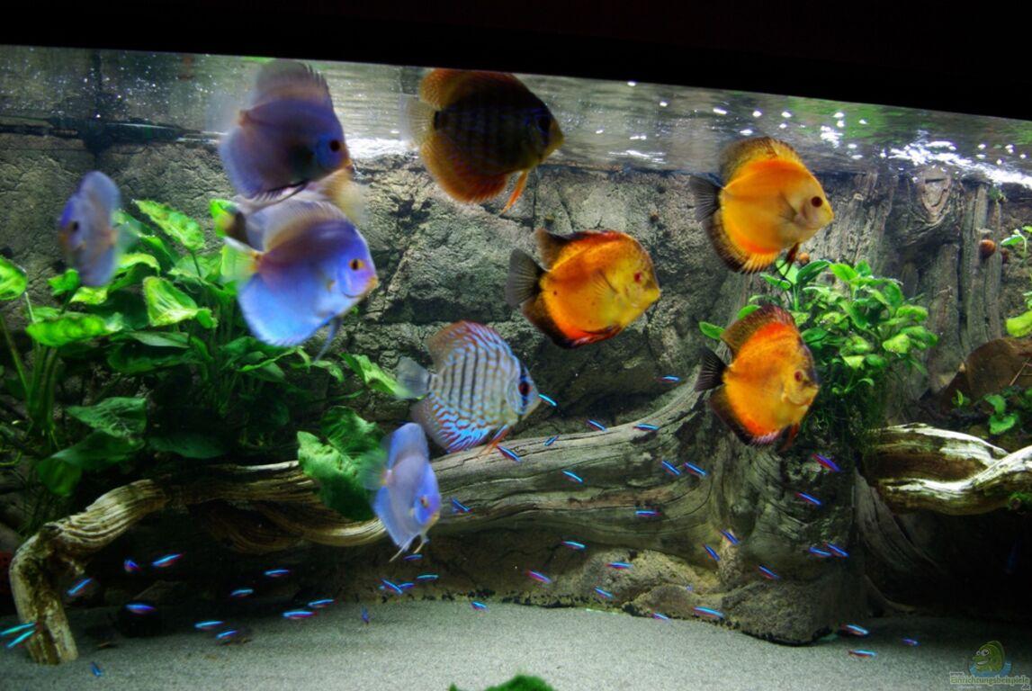 Aquarium von jens beier becken 16017 for Co2 tabelle jbl