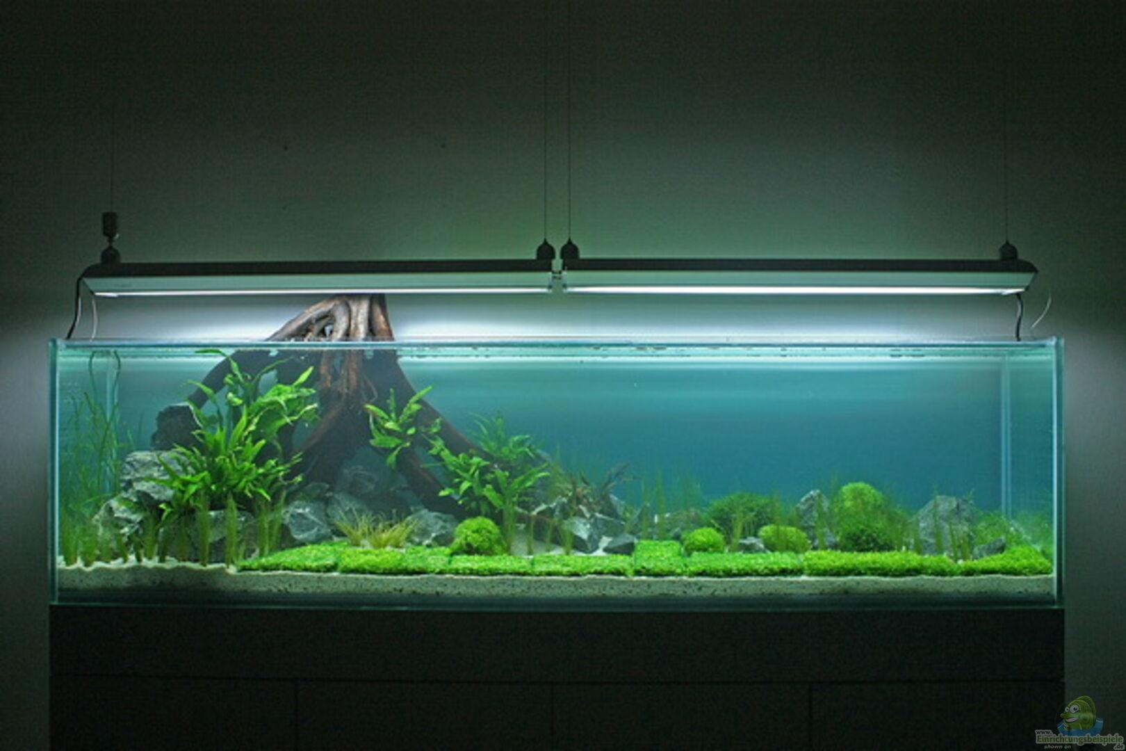 aquarium von rick james 16020 valley of rainbows. Black Bedroom Furniture Sets. Home Design Ideas