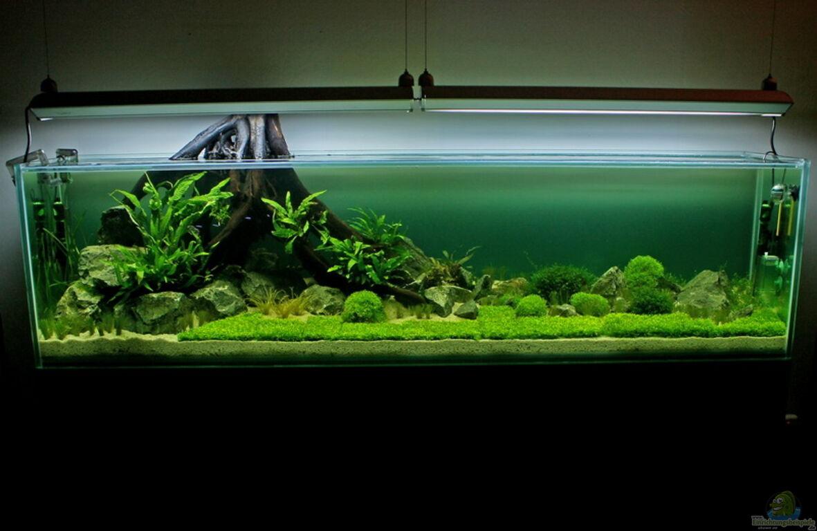 aquarium von rick james valley of rainbows. Black Bedroom Furniture Sets. Home Design Ideas