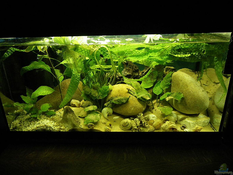 aquarium von bazzi becken 16048. Black Bedroom Furniture Sets. Home Design Ideas