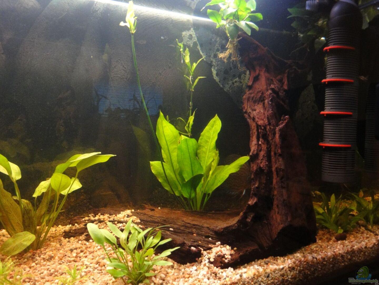 aquarium von yellow 16072 diskus. Black Bedroom Furniture Sets. Home Design Ideas