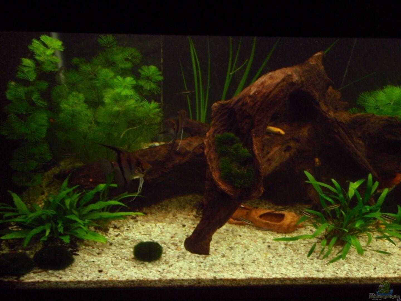 aquarium von thomas mitter 16078 tropic dream. Black Bedroom Furniture Sets. Home Design Ideas