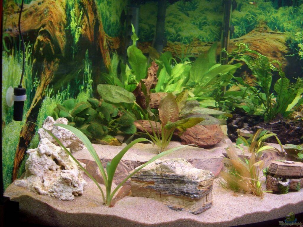 aquarium von andre schreiter eckaquarium. Black Bedroom Furniture Sets. Home Design Ideas
