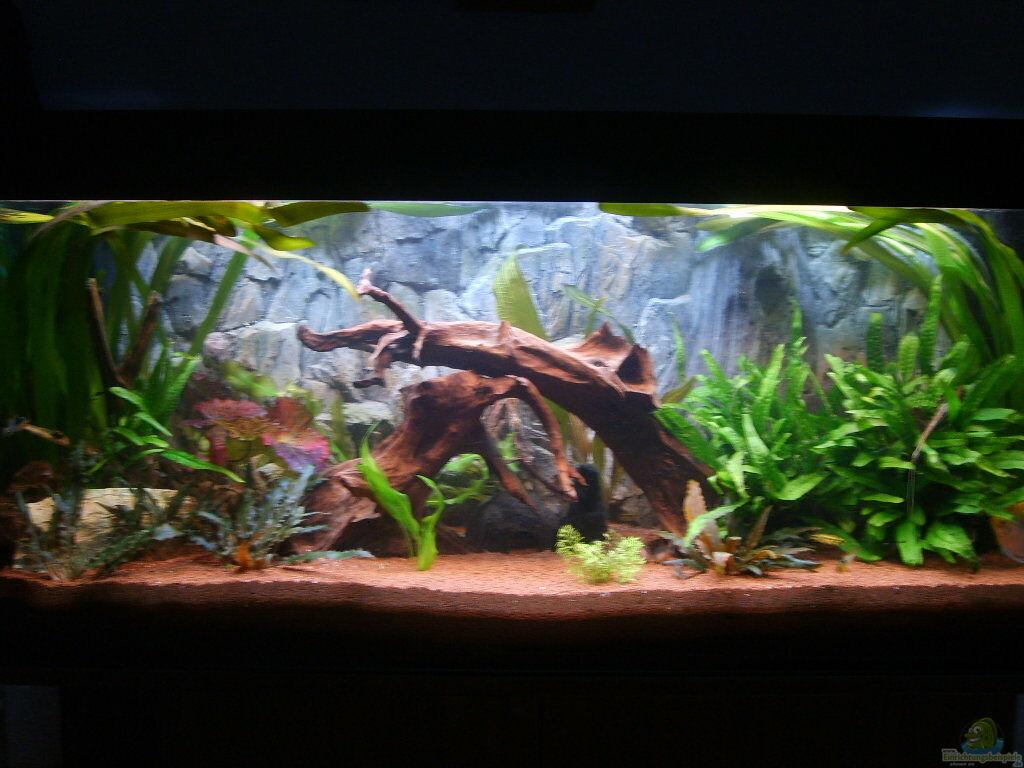 Aquarium von andee juwel aquarium for Aquarium juwel