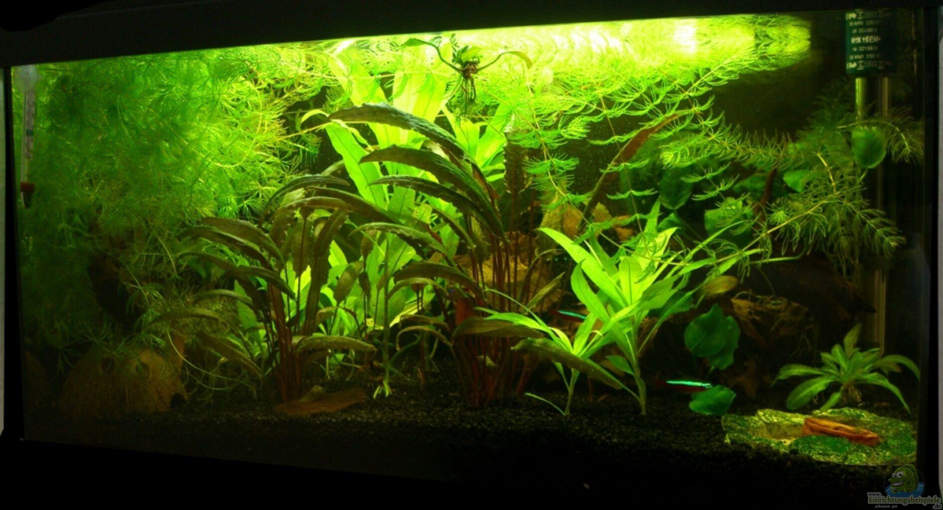 aquarium von derausdemnixkam mein kleines erstes. Black Bedroom Furniture Sets. Home Design Ideas