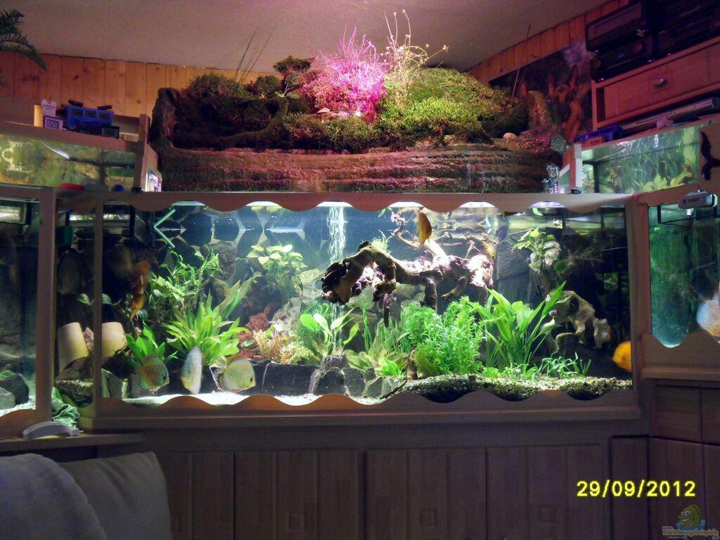 Ulrich sauerhering aquariumanlage diskus mehr becken 16219 for Diskus aquarium