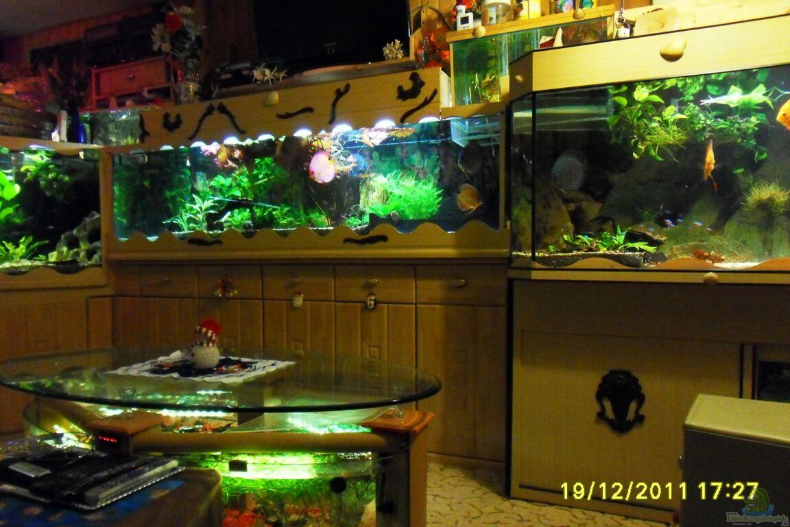 ulrich sauerhering aquariumanlage diskus mehr becken 16219. Black Bedroom Furniture Sets. Home Design Ideas