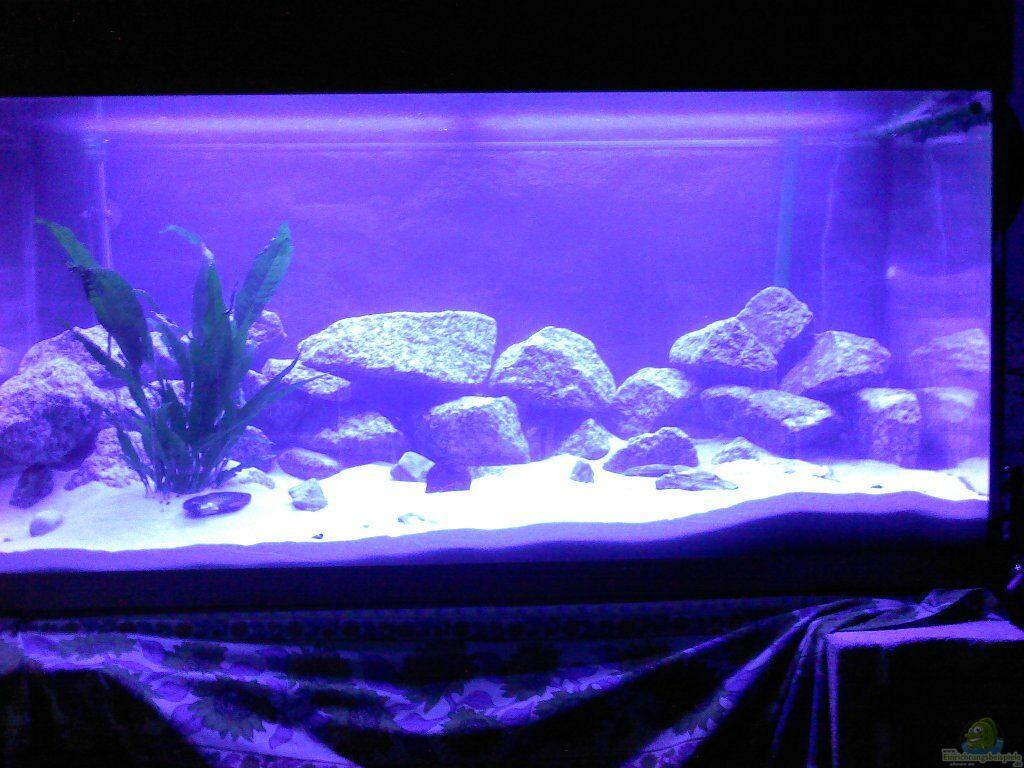aquarium von manuel quiros nun z nkatha bay. Black Bedroom Furniture Sets. Home Design Ideas