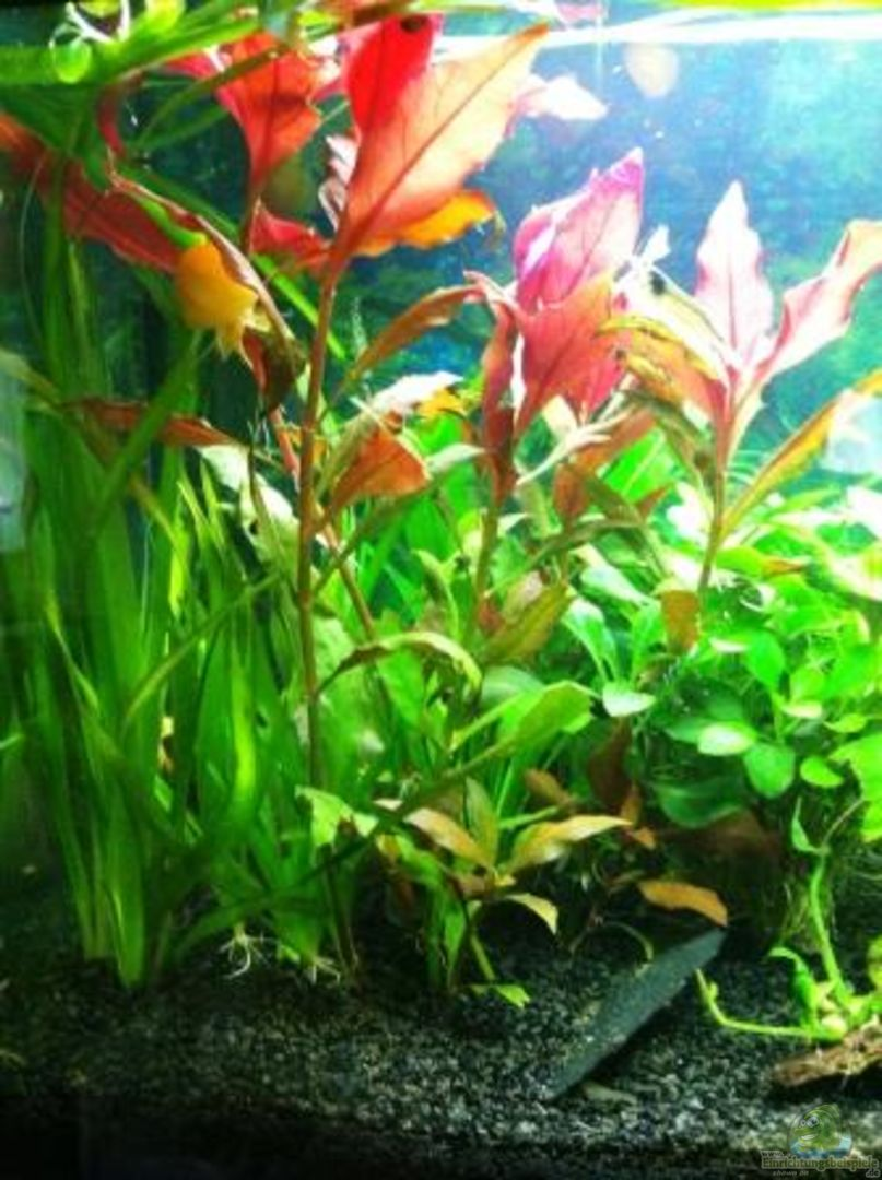 Aquarium von florian zisch 16272 waterhome for Waterhome aquarium