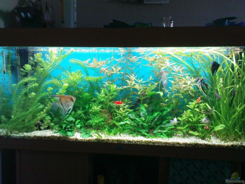 Aquarium von michael k ln biotop for Aquarium 120x40x50