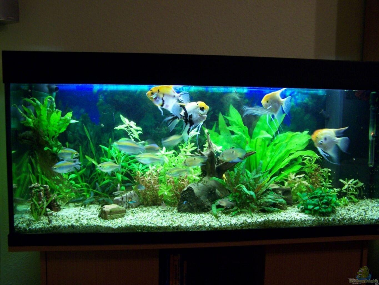 aquarium von dani7 skalar einrichtungsbeispiele. Black Bedroom Furniture Sets. Home Design Ideas