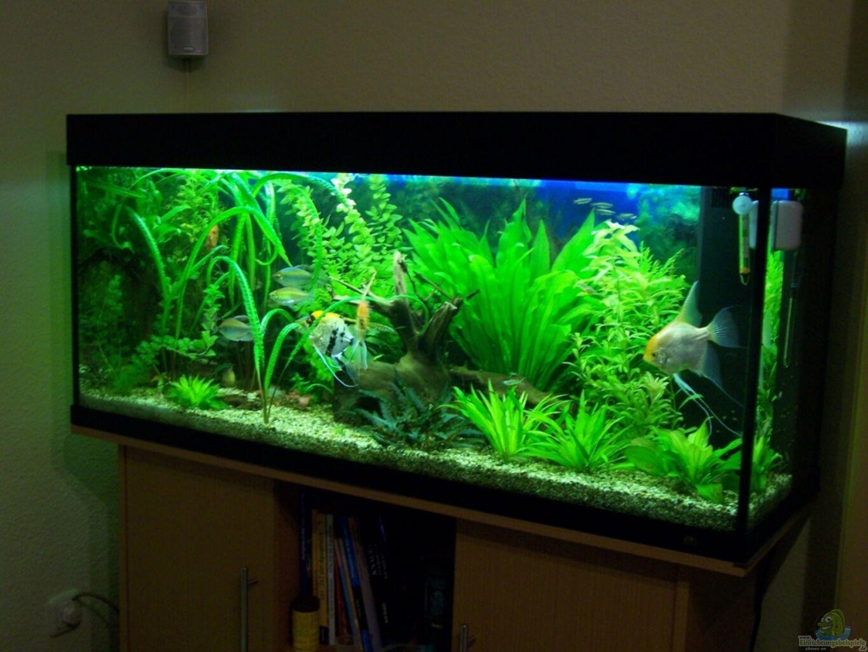 Aquarium von dani7 skalar for Skalar aquarium