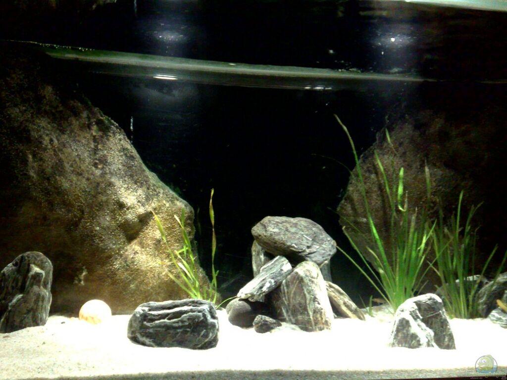 aquarium von h is malawi tv nur noch als beispiel. Black Bedroom Furniture Sets. Home Design Ideas
