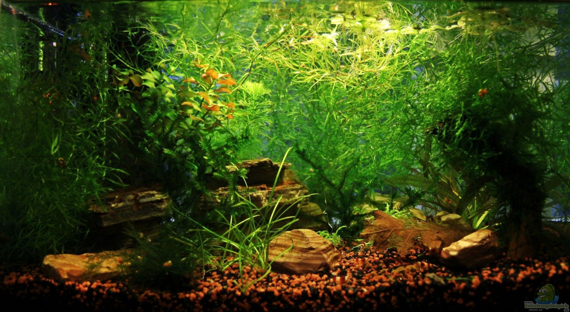 aquarium von mona6464 red bee garnelen. Black Bedroom Furniture Sets. Home Design Ideas