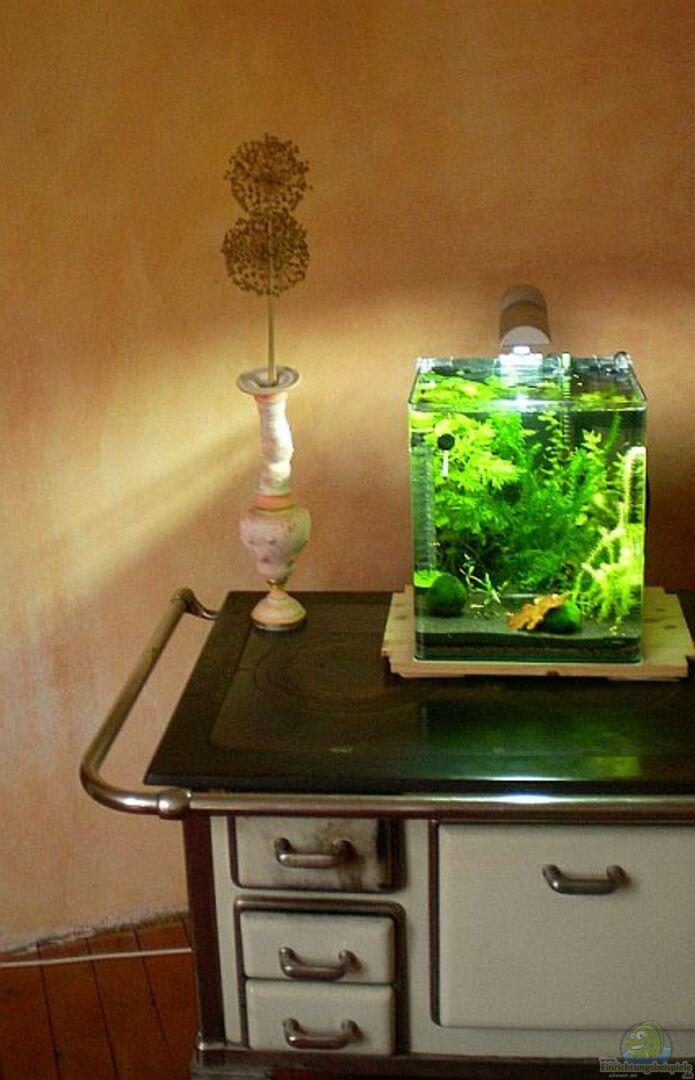 aquarium von minifisch 16445 garnelen zucht aquarium. Black Bedroom Furniture Sets. Home Design Ideas