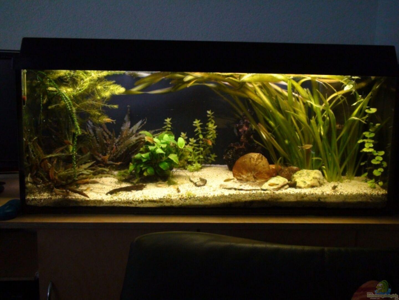 aquarium von xaquix 16455 gesellschaftsbecken. Black Bedroom Furniture Sets. Home Design Ideas