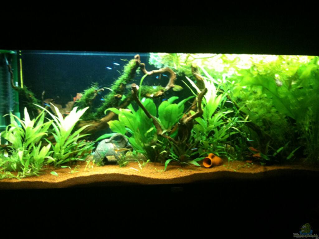 aquarium von flevus flev s s wa tank mooswald. Black Bedroom Furniture Sets. Home Design Ideas