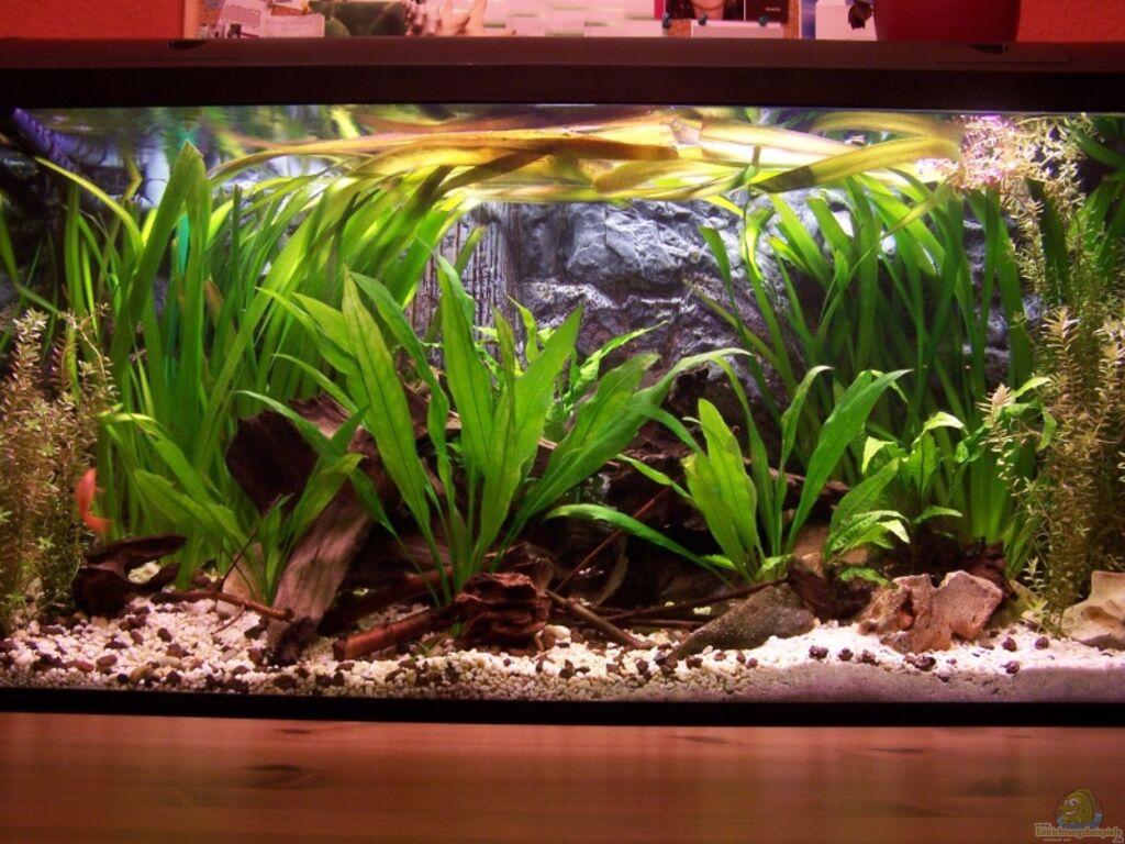 aquarium von meeki meeki heim. Black Bedroom Furniture Sets. Home Design Ideas
